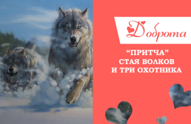 Притча: Стая волков и три охотника