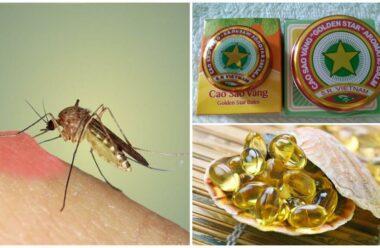 Замучили Комарі і Мухи? Ось вам дієві і натуральні засоби для відлякування «непроханих гостей».
