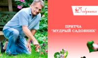 Притча «Мудрый садовник»