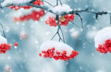 21 січня — день Омеляна Зимового: звичаї та прикмети