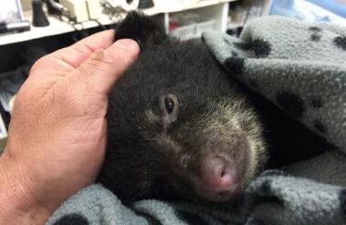 Хлопець врятував ведмедика, ризикуючи свободою і життям