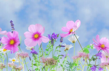 Що Ваші улюблені квіти розповідають про Вашу особистість