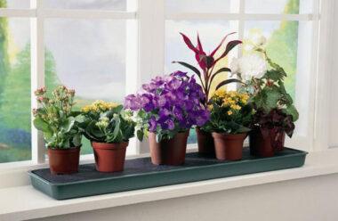 Догляд за кімнатними рослинами, не забудьте це зробити