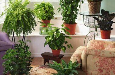 Ви маєте знати про рослини, які негативно впливають на стосунки в родині і шкодять сімейному щастю