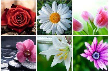 Дізнайся квітку свого імені. Це цікаво знати.