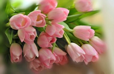 На душе уже царит Весна!