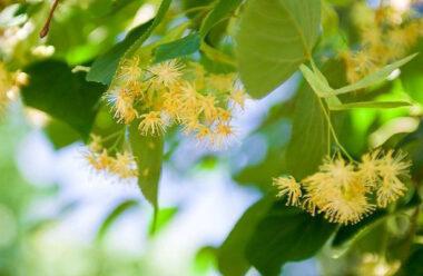 Прикмети і забобони: як за допомогою дерева привернути удачу
