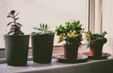 Весняний догляд за кімнатними рослинами: основні правила яких слід дотримуватися
