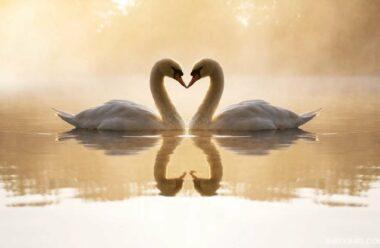 Чим відрізняється Кохання від Любові. Надзвичайно мудра притча.