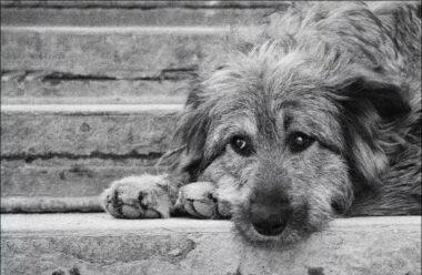 Седой старик у станции метро принёс еду для брошенной собаки