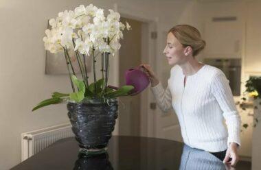 Орхідеї: секрети догляду, про які має знати кожна господиня.