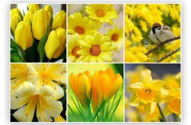 Ці квіти мають чарівну силу, коли доглядаєш за ними, життя стає кращим.