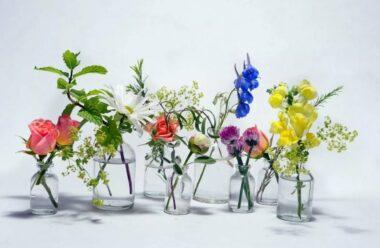 Як надовго зберегти квіти свіжими. Корисні поради для жінок.