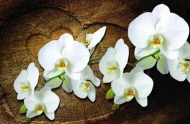 Орхідея — не тільки ніжна квітка, а і сильний жіночій оберіг