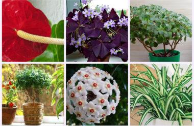 Кімнатні рослини, які приносять у дім любов і сімейне щастя