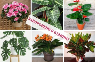 Кімнатні квіти, які наносять таємні удари, їх не можна тримати в будинку