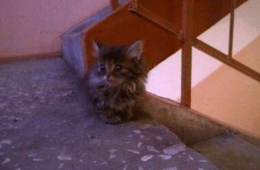 Історія про кошеня, яке самостійно знайшло собі дім