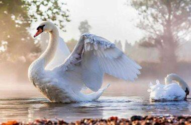 Тварини, які зберігають подружню вірність все своє життя — Люди, вчіться у них!
