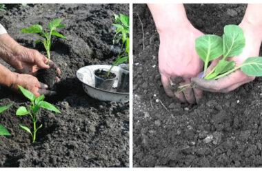 Яку садити розсаду в Травні: коли і що садити, сприятливі дати для посадки