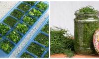 Цікаві способи заготовити весняну зелень на зиму. Господині на замітку!