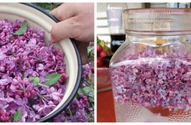 Бузковий цвіт має дуже сильні лікувальні властивості. Встигніть запастись на піку цвітіння.