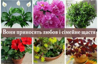 Кімнатні рослини, які принесуть любов і сімейне щастя у ваш будинок, вам варто знати про них.