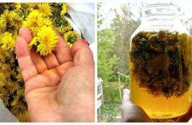 Кульбаба має надзвичайно сильні лікувальні властивості. Встигніть запастись на піку цвітіння.