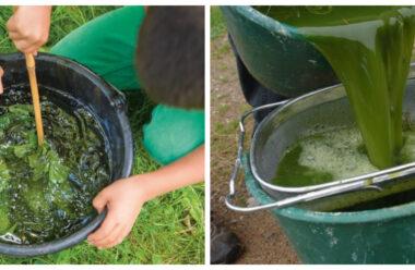Настій кропиви — натуральний спосіб підживи для рослин. Городникам на замітку.