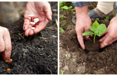 Дізнайтеся що можна посадити на городі в липні, щоб встигнути зібрати урожай — Городникам на замітку.