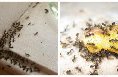 Вас уже замучили мурашки в будинку? Є дієвий спосіб позбутися їх на довго!