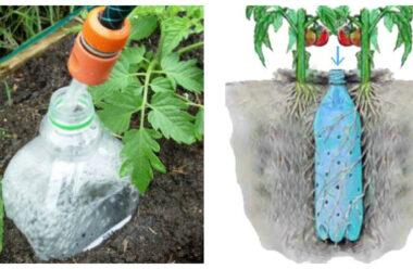 Крапельний полив за допомогою — пластикової пляшки. Це справді працює!