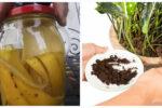 Картопляний відвар і шкурка від бананів — натуральні добрива для кімнатних квітів