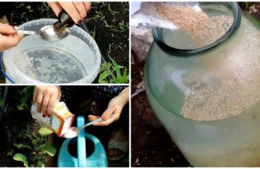 Головні натуральні засоби, які допоможуть зібрати великий урожай: сода, йод, чай і дріжджі.