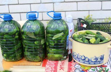 Оригінальний рецепт: Солоні огірки в пластиковій пляшці на зиму