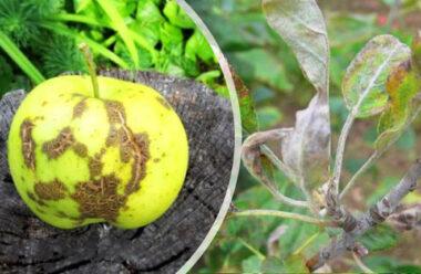 Дієві способи позбутися від шкідників яблунь і груш. Вбережіть ваші дерева і урожай.