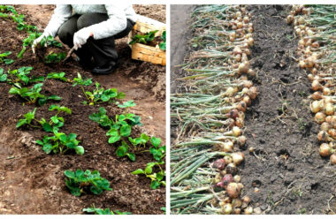 Важливі справи, які обов'язково потрібно зробити в серпні в саду і городі