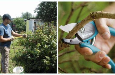 Головні справи, які потрібно обов'язково зробити в липні в саду