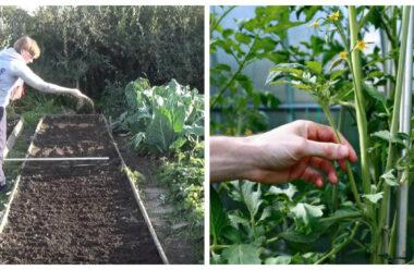 Найбільш важливі справи в городі, які обов'язково треба зробити в липні