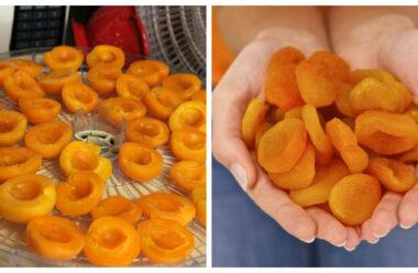 Робимо курагу з абрикоса в домашніх умовах. Просто і корисно.