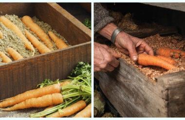 Відмінний спосіб зберігання моркви в домашніх умовах. Стоїть до весни.