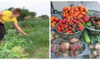 Що саме треба обов'язково зробити в липні на городі, щоб осінню зібрати гарний урожай.
