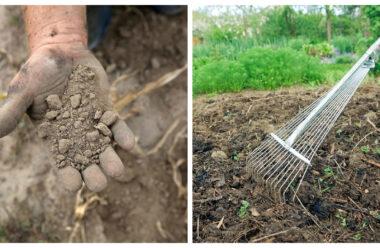Що робити, якщо ґрунт на городі «втомився» і вже не приносить гарного урожаю. Корисні поради для городників.