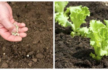 Що можна садити саме зараз, щоб восени встигнути зібрати новий врожай.