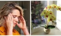 Якщо у вас часті головні болі, тоді приберіть ці квіти зі свого будинку.