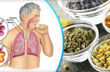Кращі народні методи, які швидко виведуть мокроту з легень і усунуть кашель.