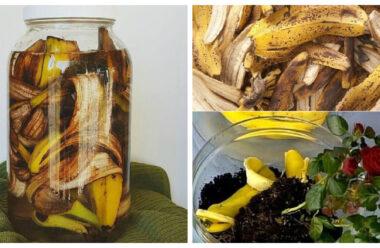 Добриво з бананової шкірки — зміцнює кореневу систему, стимулює ріст і цвітіння кімнатних рослин