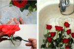 Хитрощі, до яких вдаються флористи для збереження свіжості зрізаним квітам.