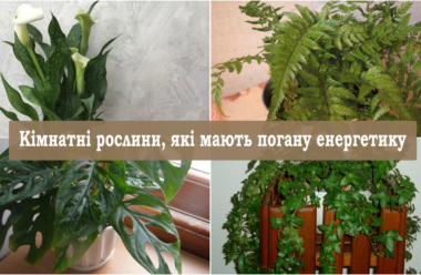 Кімнатні рослини, які мають погану енергетику. Приберіть їх з оселі, щоб не нашкодили.