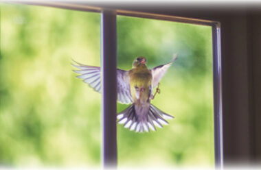 Що означає, коли у вікно стукає пташка. На які моменти слід звернути увагу