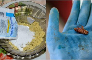 Засіб на основі борної кислоти, який допоможе позбутися тарганів в будинку